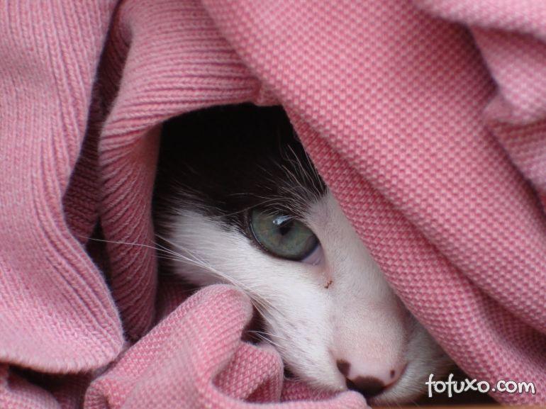 Gatos podem ser melhores em identificar sentimentos dos humanos do que cães