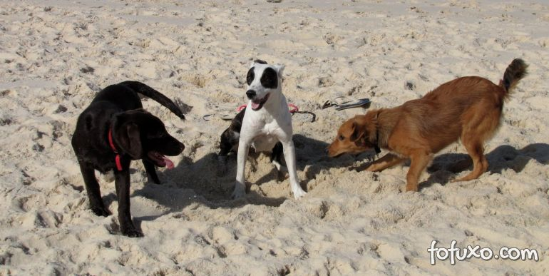 Cachorros agitados ou Hiperativos?