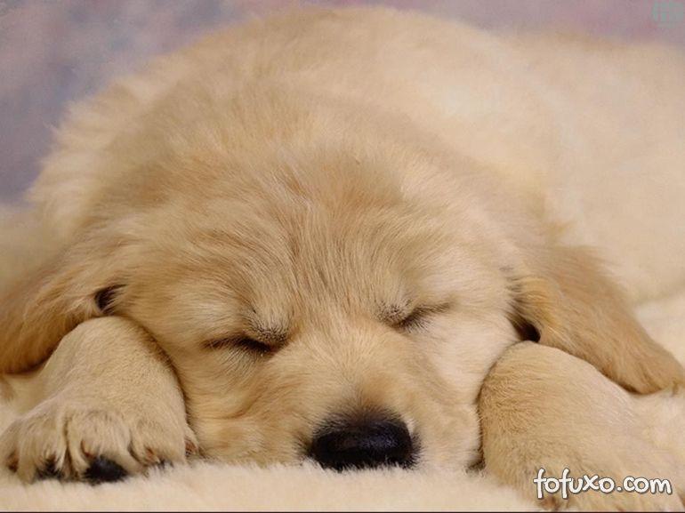 Saiba mais sobre o sono dos cachorros