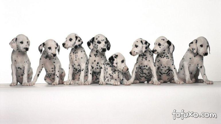 Relembre cinco cães famosos do Cinema