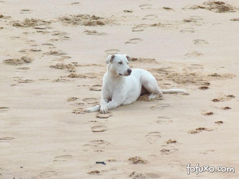 Conheça os riscos que envolvem os cães na beira da praia