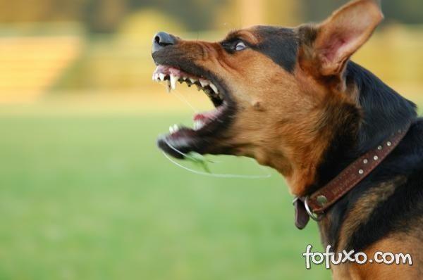 Dicas para lidar com a agressividade de alguns cães