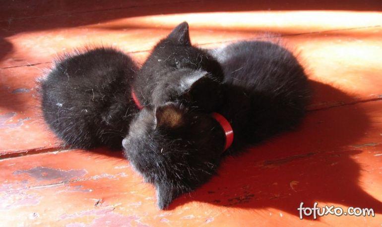 Existem cães ou gatos que tenham gêmeos?