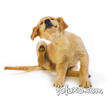 Coceira cão
