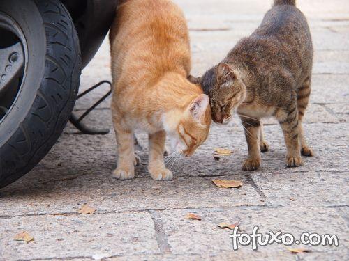 Dicas para cuidar da sua gata no Cio