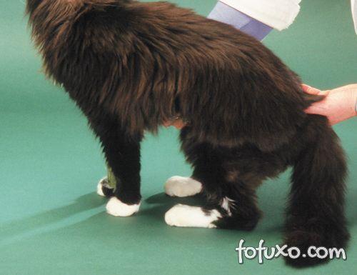 Posição plantígrada gato