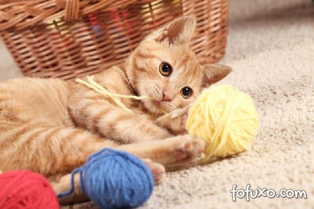 Confira algumas dicas e truques para ensinar o seu gato