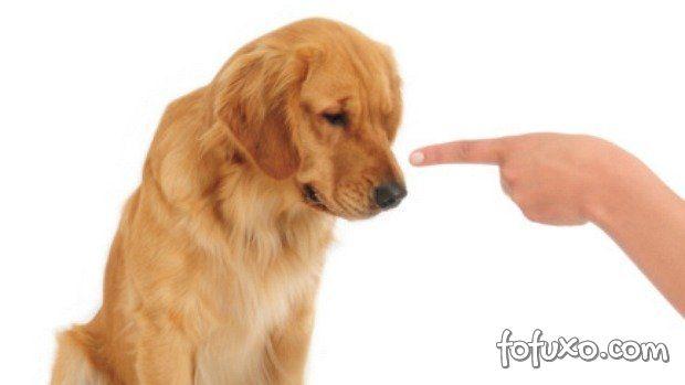 Erros que você comete com o seu cão!