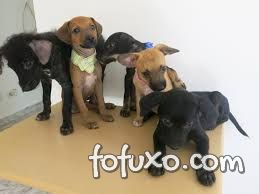 Conheça o reality show animal que incentiva a adoção