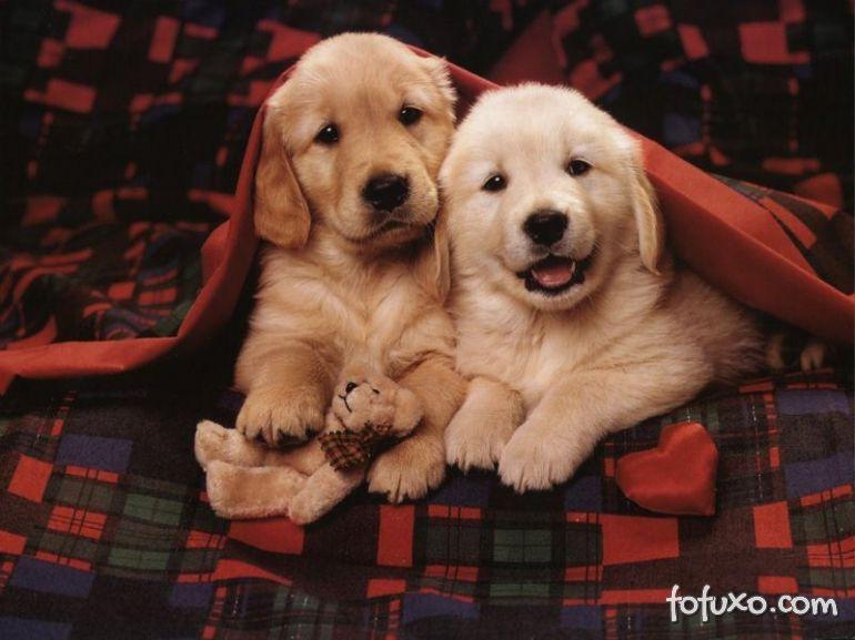 Novos estudos comprovam que cães identificam humor dos humanos.