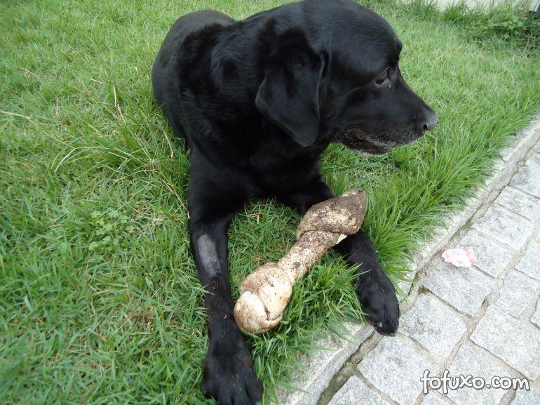 Os motivos que leva os cães a enterrarem seus ossos