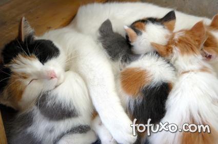 Gatos mamando
