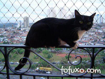Dicas para deixar o seu gato mais caseiro