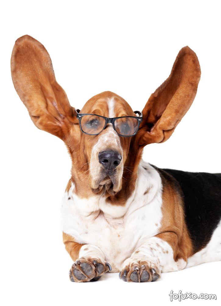 Confira informações sobre a surdez em cães