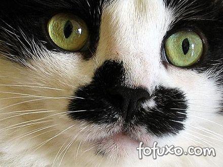 Por que os gatos possuem bigodes?