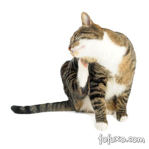 gato coçando