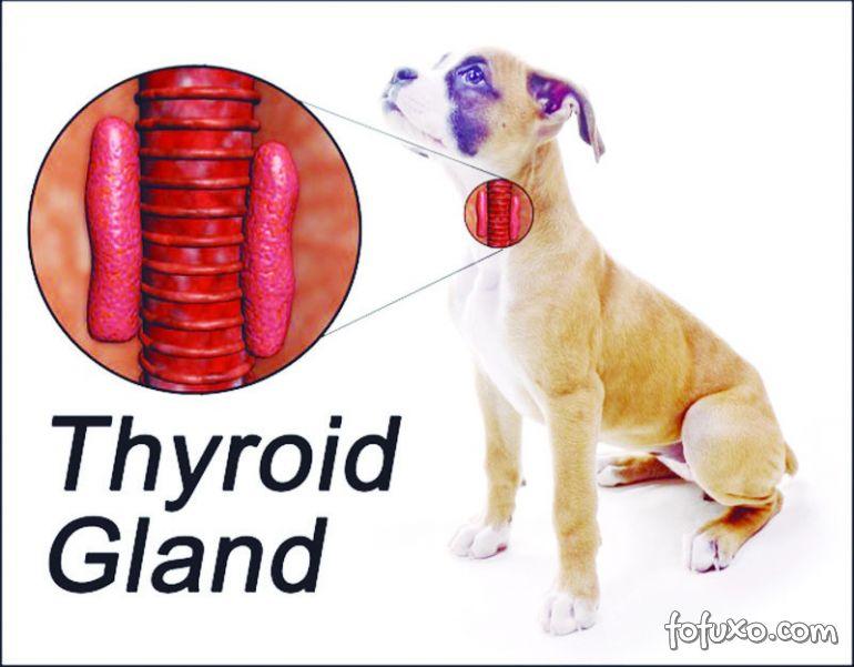 Hipotireoidismo em cães – Saiba mais sobre a doença