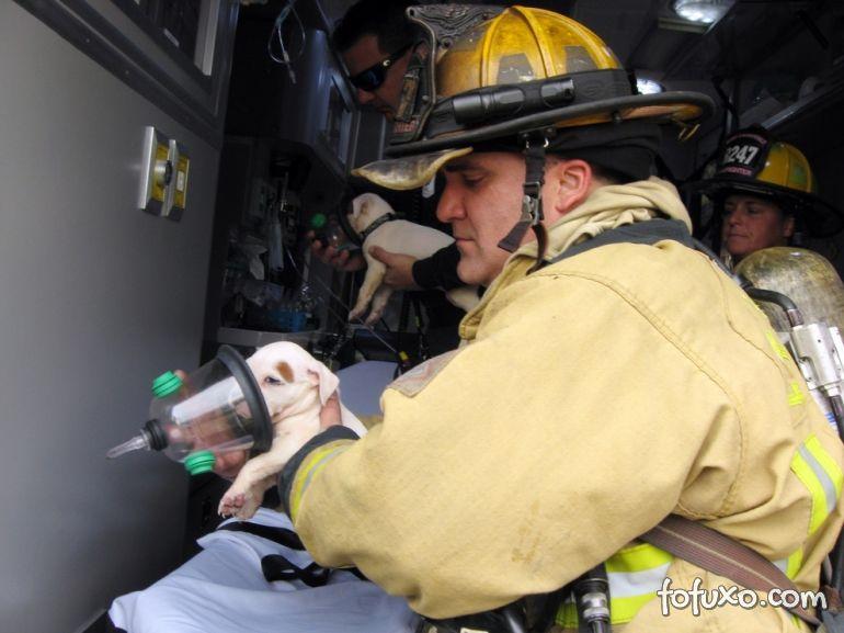 Bombeiro fazendo oxigenioterapia em cão