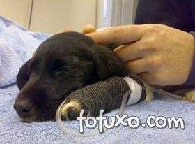 Saiba identificar e tratar a desidratação em cães