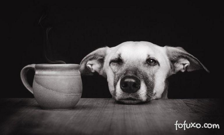 Momento de descontração - Foto 20