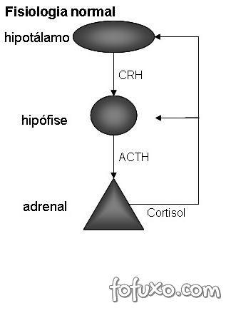 Eixo hipofise hipotalamo adrenal