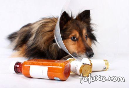 Tratamento cão
