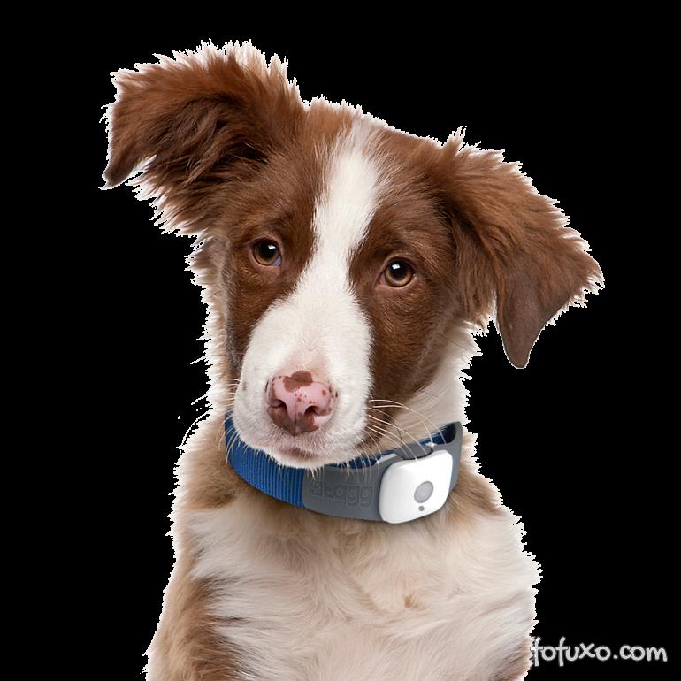 GPS para cães