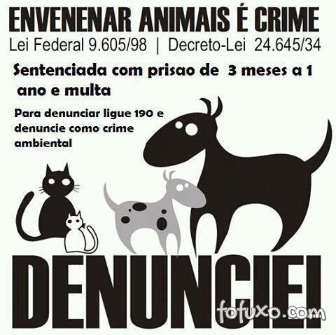 Envenenamento de animais é crime