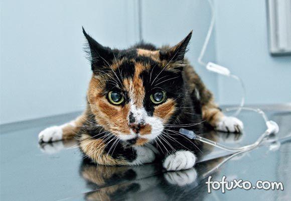 gato fluidoterapia