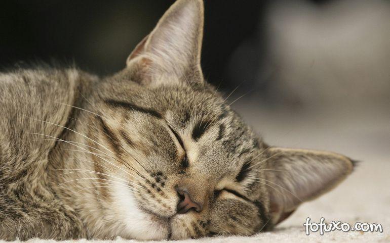 Por que os gatos são tão dorminhocos?