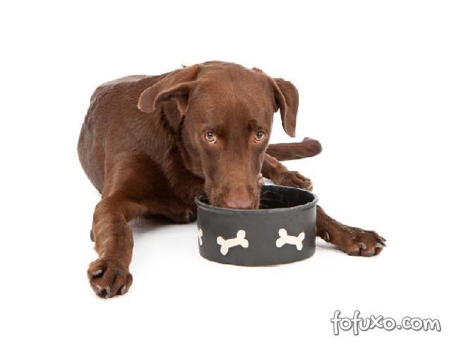 cão grande comendo