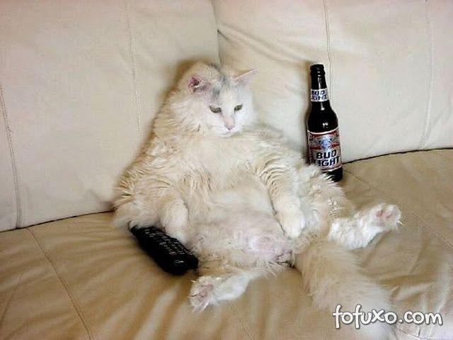 gato sedentário