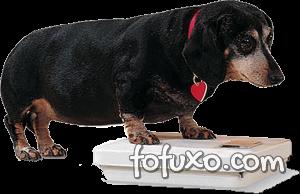 Obesidade já atinge 40% dos cães no Brasil