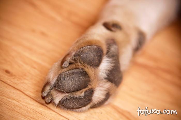 Cuide das patas do seu cãozinho