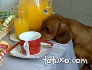 Dicas de como lidar com cães que roubam comida
