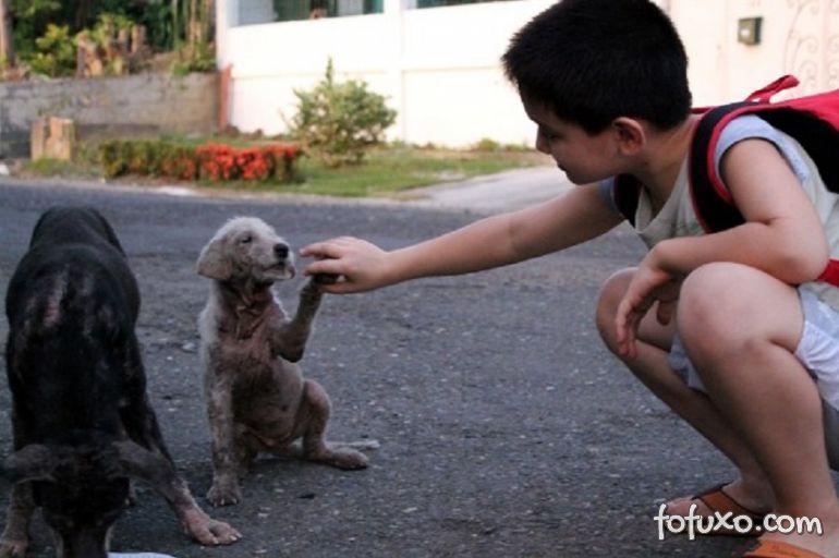 Menino de 8 anos das Filipinas cria abrigo para cachorros abandonados 1
