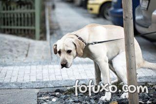 cão defecando