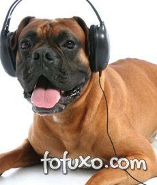 cachorro ouvindo fone
