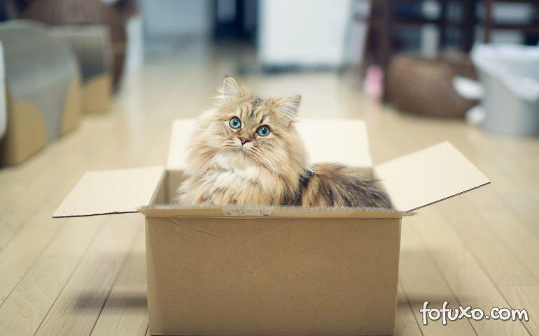 É verdade que gatos se apegam somente a casa?