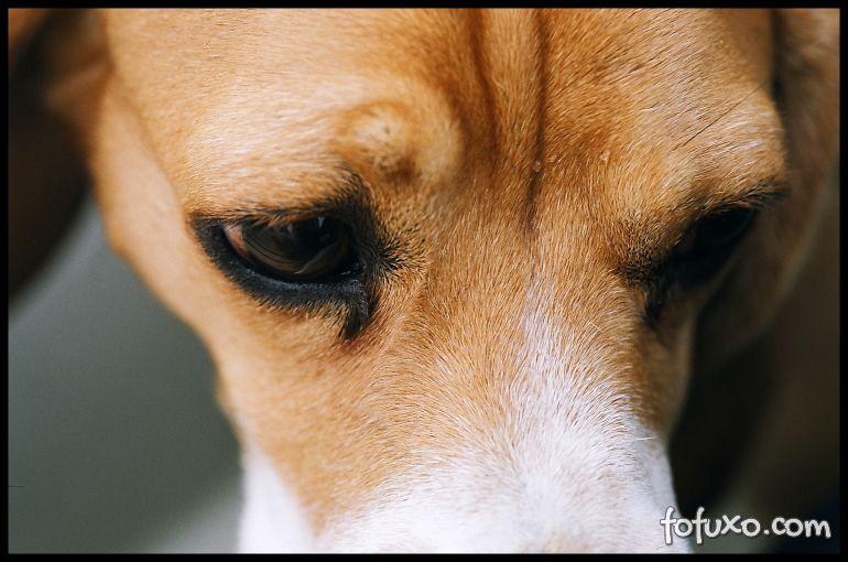 Câmara dos deputados aprova o fim dos testes de produtos cosméticos em animais