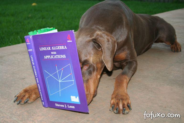 Pesquisa mostra que cães podem ajudar em aulas de leitura