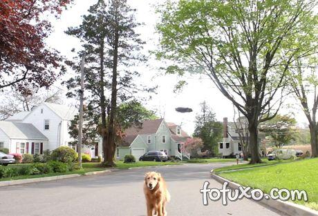 Conheça o futuro das caminhadas com seu cachorro