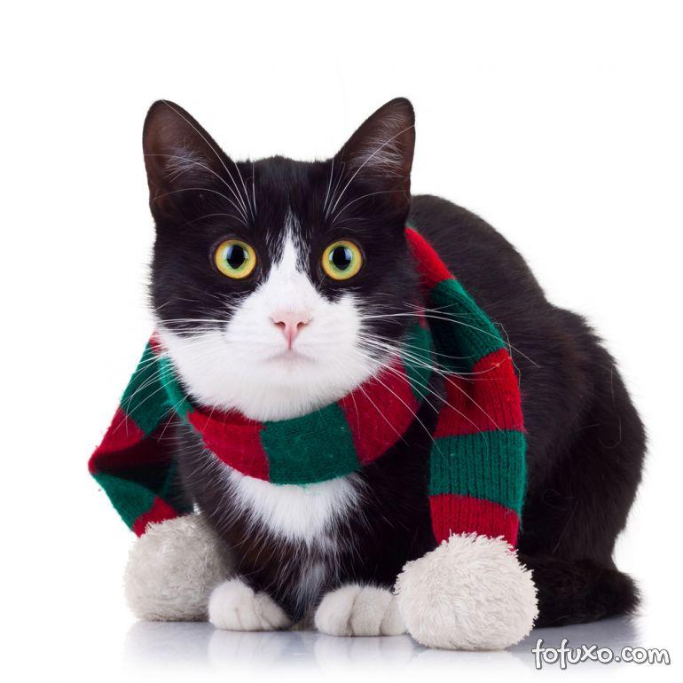 Gatos também sentem frio?