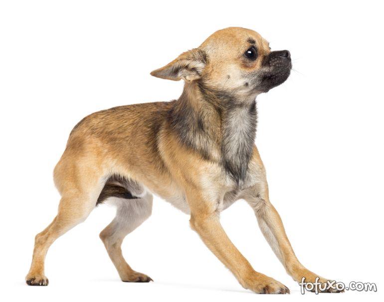 Agressividade e depressão em cães podem ser resolvidos pela psicologia canina