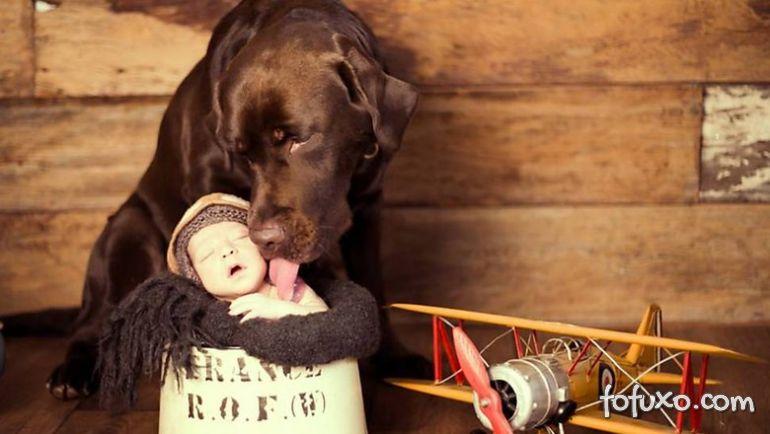 Fotógrafa cria ensaios com bebês e cães - Foto 1