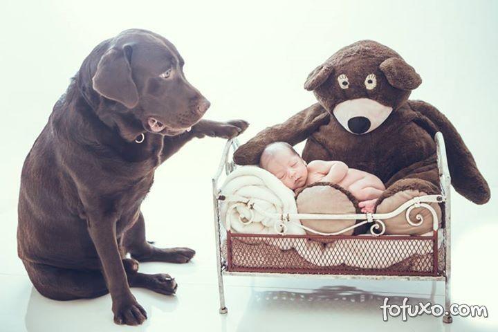 Fotógrafa cria ensaios com bebês e cães - Foto 3