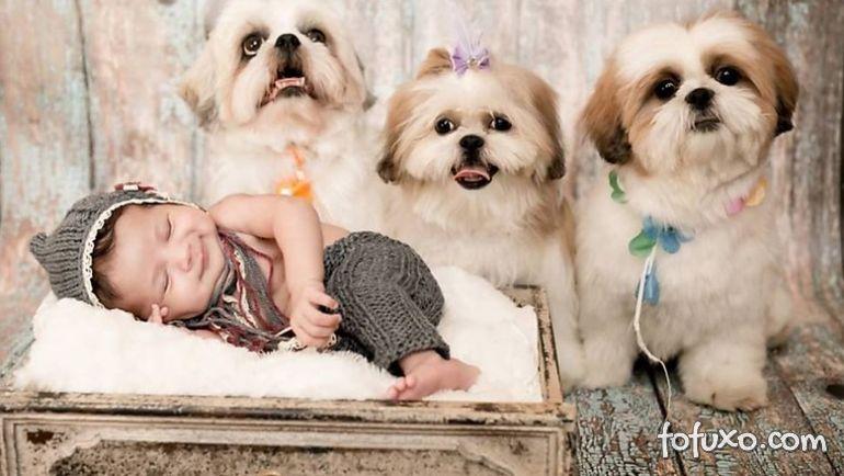 Fotógrafa cria ensaios com bebês e cães - Foto 4