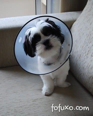 cadela com colar protetor