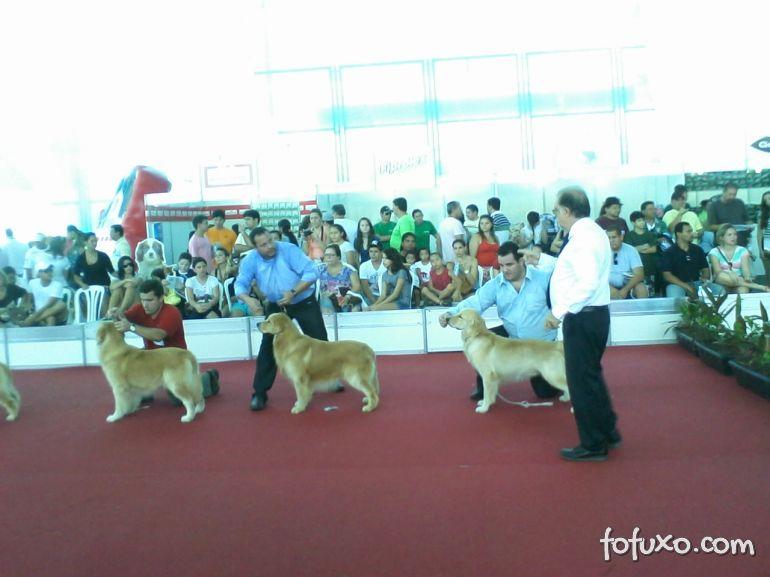 Brasil entra definitivamente no roteiro das grandes exposições de raça