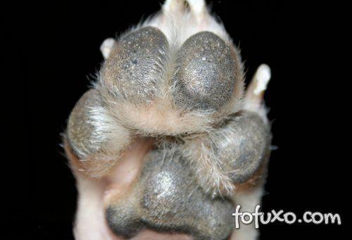 Você conhece a pata do seu cão?
